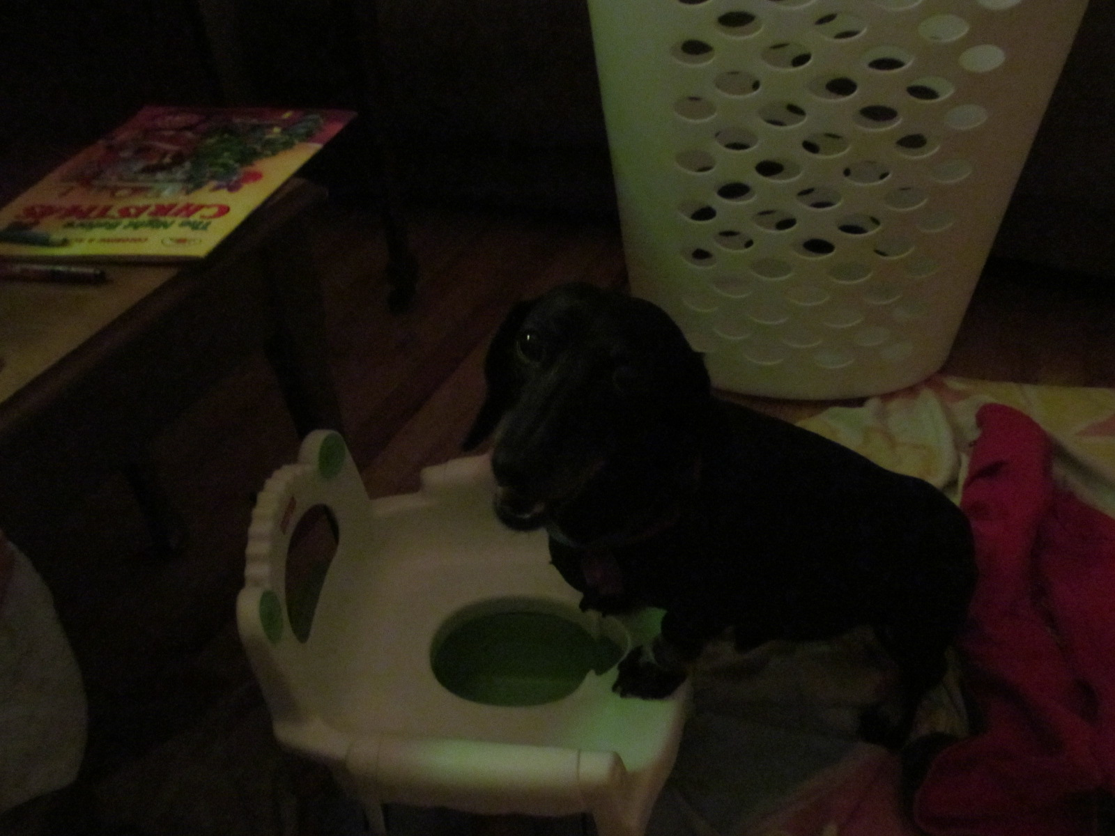 That's the dog.  That's the potty chair.